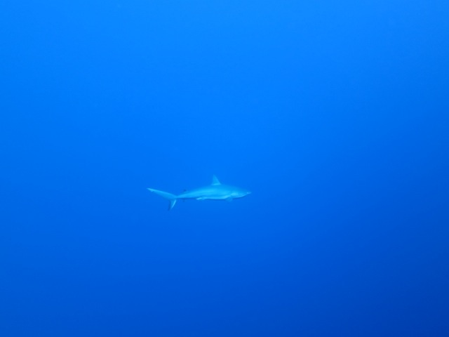 Dr. Christy Semmens-Pattengill photographed this shark yesterday!!